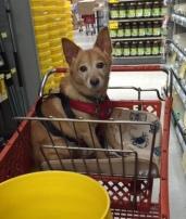 zander-shopping